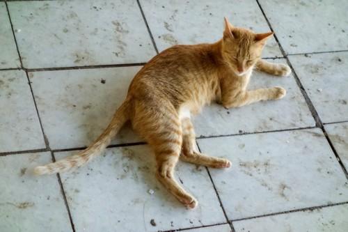 タイルの上の猫