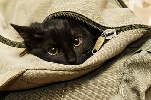 鞄の中に入る黒猫