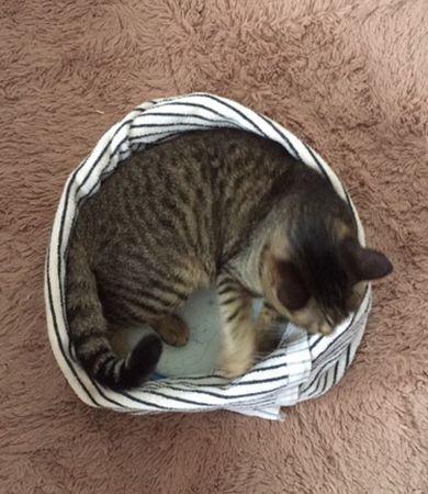 猫が寝ている 顔が右側