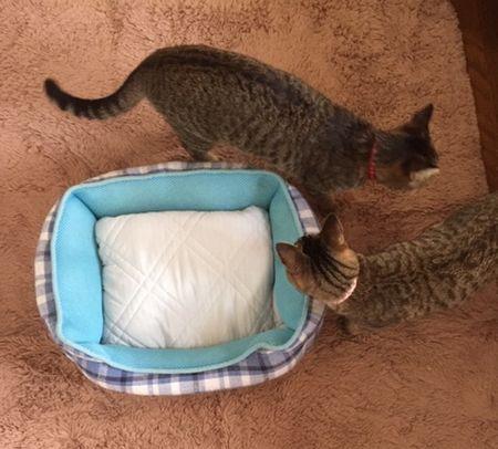ベッドの周りに2匹がいる