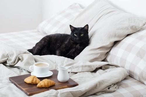 ベッドに置かれた朝食と寛ぐ猫