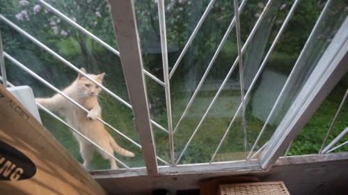 鉄格子にぶらさがる猫