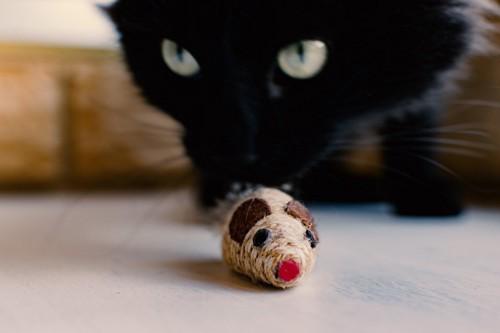 黒猫とねずみのおもちゃ