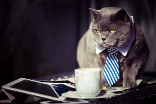 ネクタイをする猫