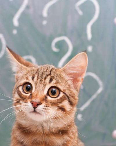 クエスションマークと何かを見つめる猫