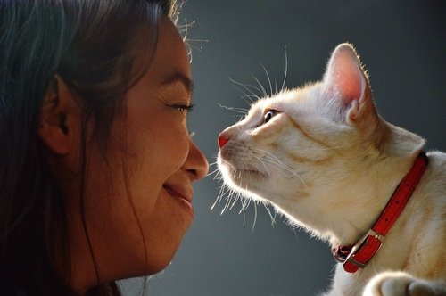 人間の鼻に近づく猫