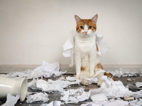 ちり紙を部屋中に散らかした猫