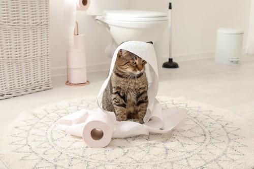 バスルームでトイレットペーパーで遊ぶ猫