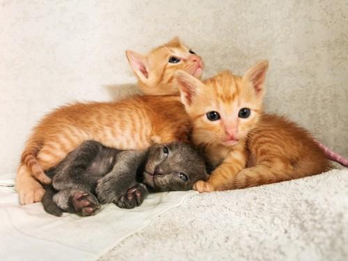 生後2ヶ月の子猫たち