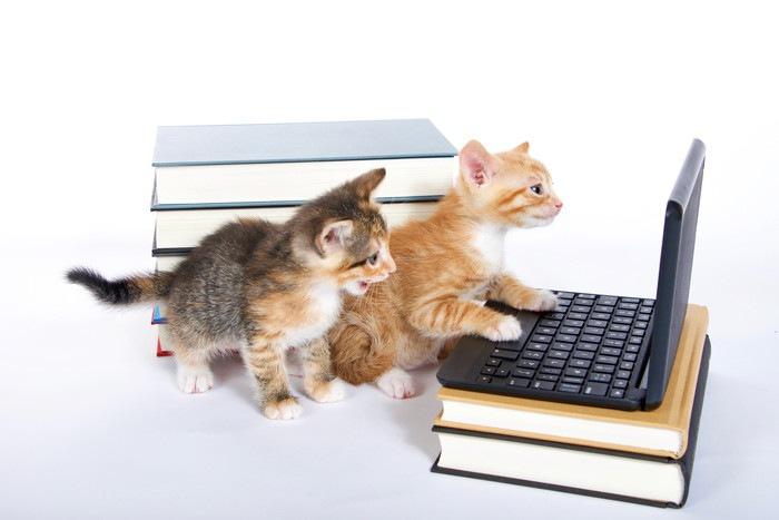 パソコンを見る猫2匹