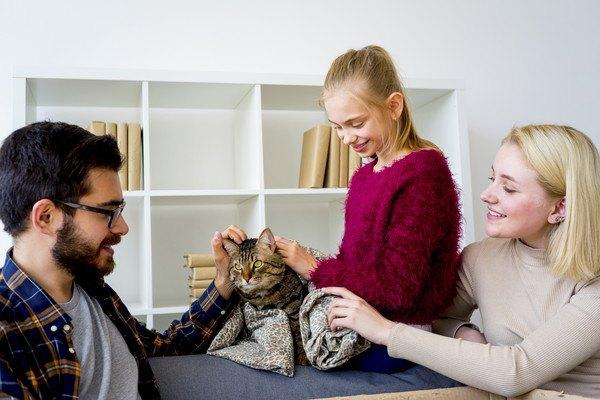 家族に撫でられるキジ猫