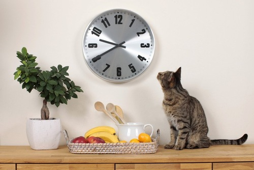 時計を見上げる猫
