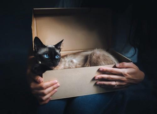 箱に入った猫を抱える人