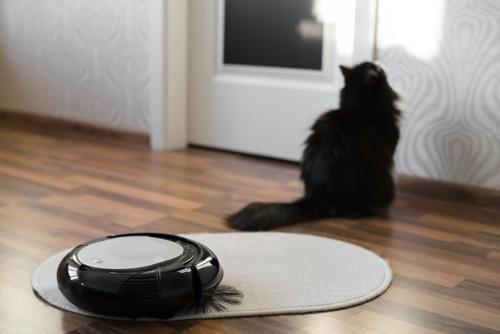 ロボット掃除機を嫌がる猫
