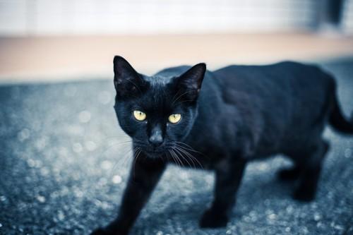 道を歩く黒猫