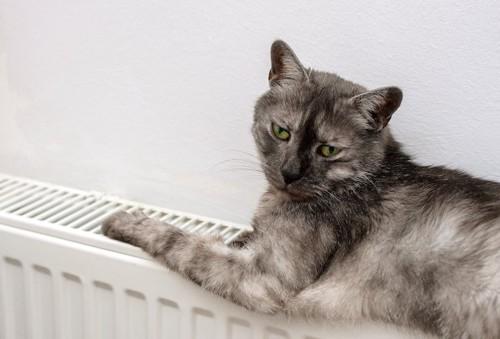 暖房器具の上でくつろぐ猫