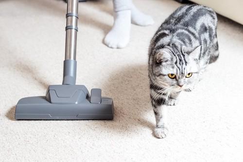 猫のいる部屋の中に掃除機をかける