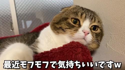 前足をカゴにかけて寝そべる猫