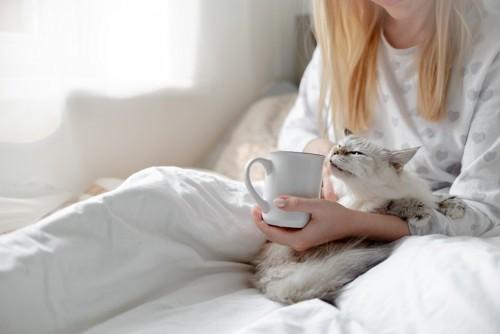ベッドの上でマグカップを持つ女性と猫