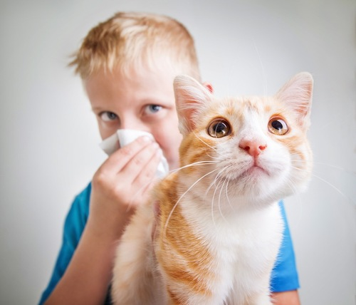 茶白猫とティッシュで鼻をおさえる少年