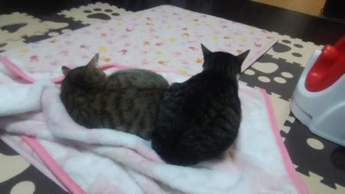 猫の背中を向けてる写真