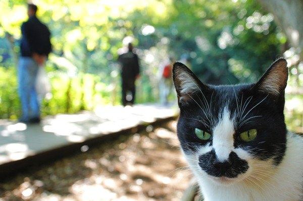 印象的な公園にいる黒白猫