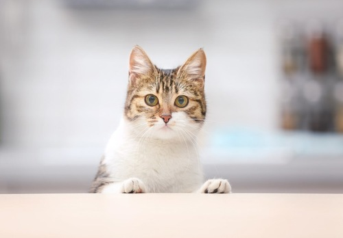 テーブルに手をついている猫