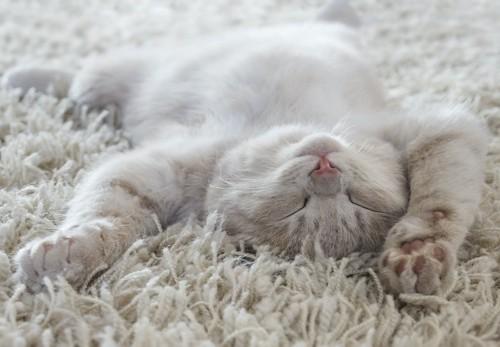 カーペットの上で仰向けに眠る猫