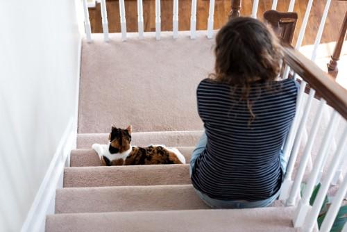 階段で座っている猫と女性