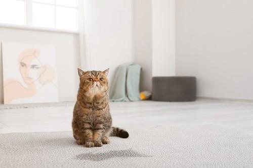 カーペットを汚して気まずい猫