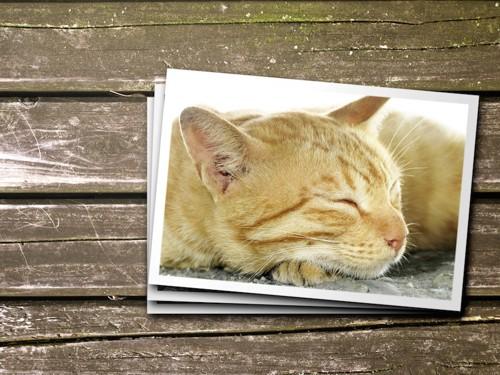 茶トラ猫の写真