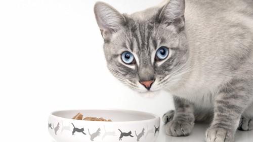 餌を食べた猫