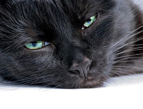 うつろな黒猫