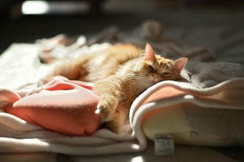 毛布の上に寝ている猫