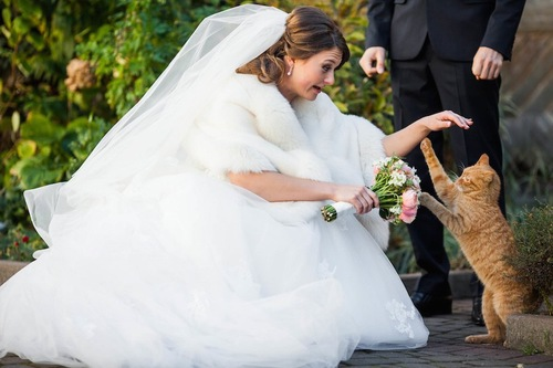 花嫁が持つブーケに戯れる猫