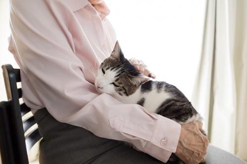膝の上の猫をなでるシニアの手