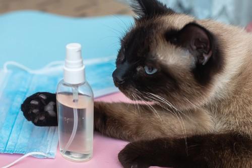 消毒スプレーと猫