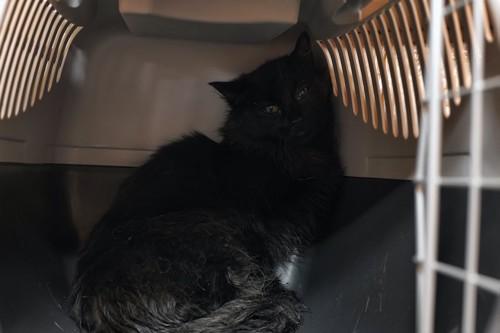 キャリーケースの奥で怯えている黒猫