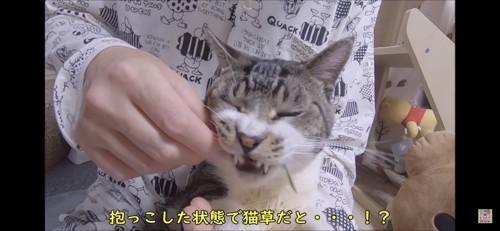 抱っこで猫草