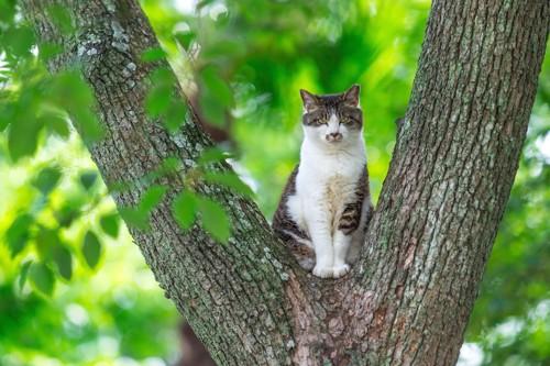 木の上で座る凛々しい野良猫