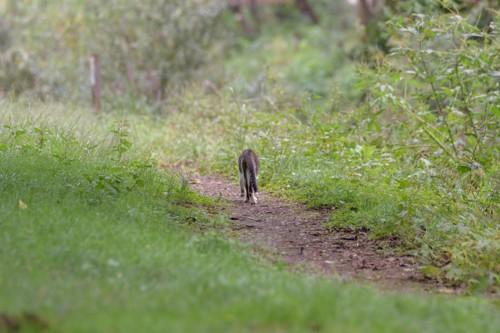 小道を向こうへ歩いて行く猫