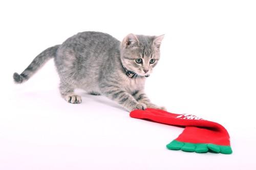 靴下で遊ぶ子猫