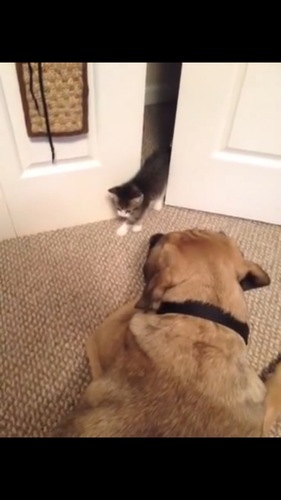 ゆっくり進む猫