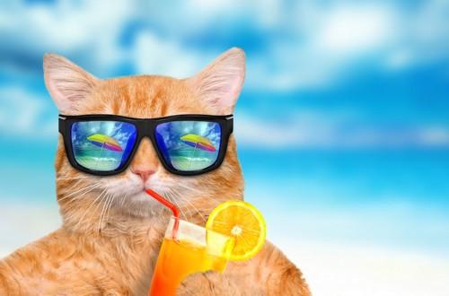 サングラスをかけてジュースを飲む猫