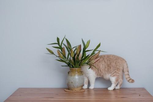 花瓶の花に隠れる猫