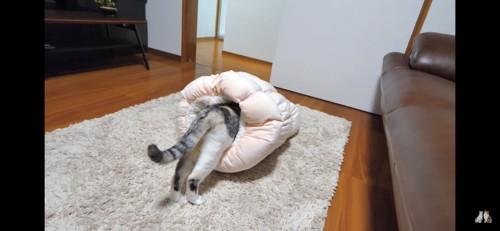 お尻だけ出ている猫