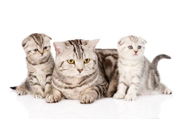 三匹の親子