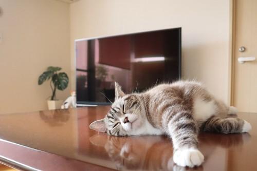 テーブルの上で寝る猫
