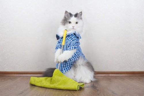 洋服を着て床の掃除をする猫