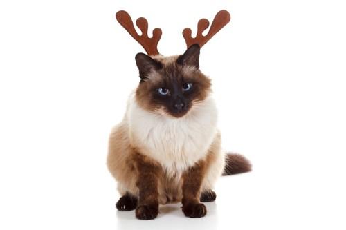 鹿の角を付けた猫